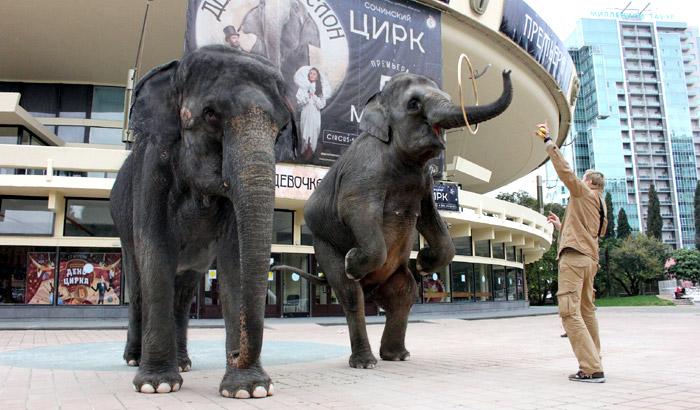Слоны возле Сочинского цирка