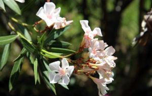 Цветы в дендрарии