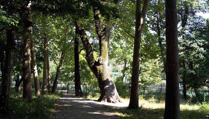 Памятник природы Дуб великан (Джубга)